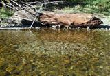 Image source: http://www2.seattle.gov/util/tours/CedarRiverBiodiversity/BullTrout/images/slide-7_bull-trout-redd.jpg